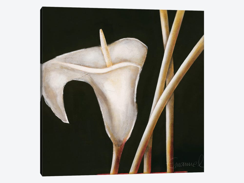 Lily In Sepia I by Beate Emanuel 1-piece Canvas Art Print