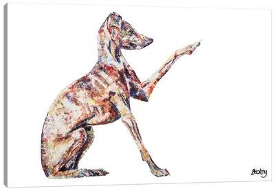 Italian Greyhound Canvas Print #BEC26