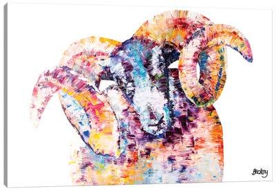Black-Faced Sheep Canvas Art Print