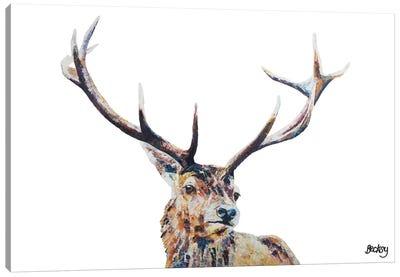 Nigel Canvas Art Print