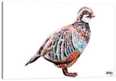 Partridge Canvas Art Print