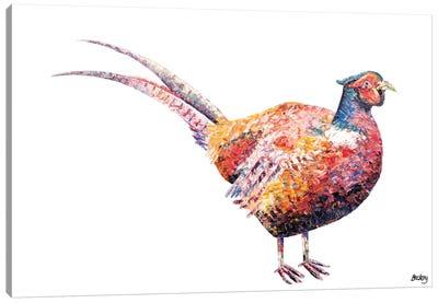 Pheasant Canvas Art Print