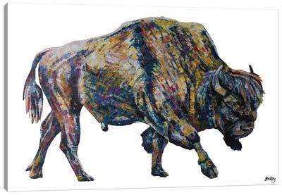 Buffalo Canvas Art Print