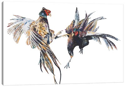 Fighting Pheasant Cocks Canvas Art Print