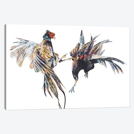 Fighting Pheasant Cocks Canvas Print #BEC73} by Becksy Art Print