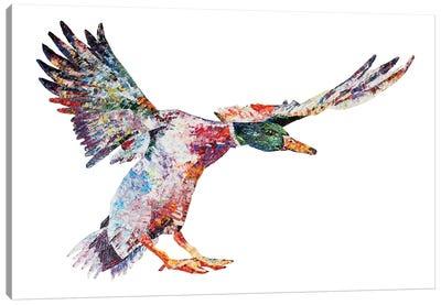 Daividh Canvas Art Print