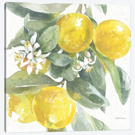 Citrus Charm Lemons I Canvas Print #BEG213} by Beth Grove Canvas Wall Art