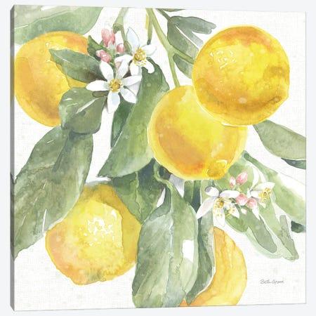 Citrus Charm Lemons II Canvas Print #BEG214} by Beth Grove Canvas Print