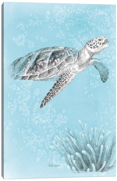 Coastal Sea Life I v2 Canvas Art Print
