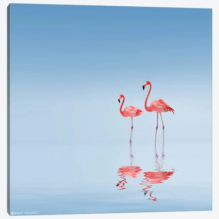Flamingo Canvas Print #BEH2} by Bess Hamiti Canvas Art Print