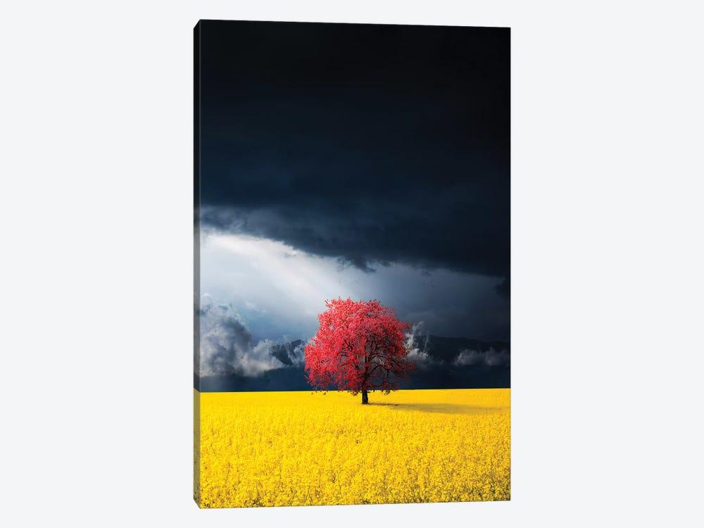 Red tree by Bess Hamiti 1-piece Canvas Art