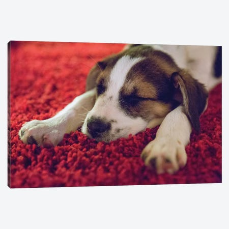 Puppy Sleeping, Minneapolis, Minnesota Canvas Print #BEO1} by Benjamin Olson Canvas Wall Art