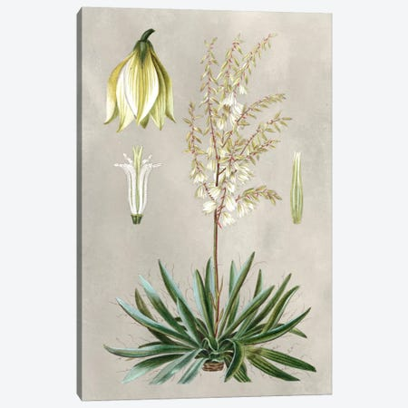 Tropical Varieties I Canvas Print #BES1} by Pancrace Bessa Canvas Print