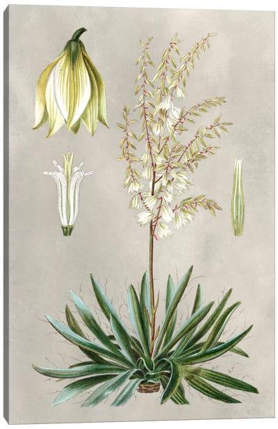 Tropical Varieties I Canvas Art Print