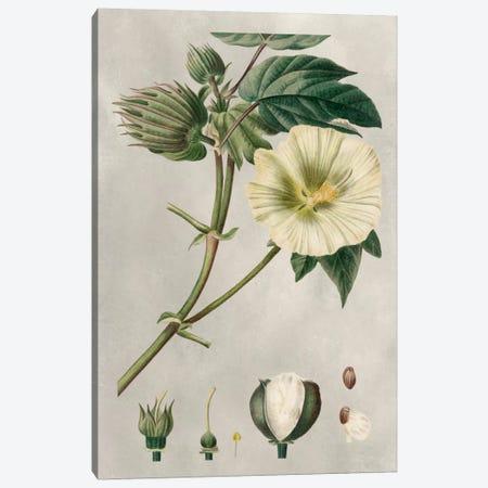 Tropical Varieties II Canvas Print #BES2} by Pancrace Bessa Canvas Print