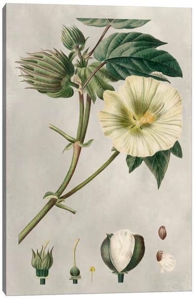 Tropical Varieties II Canvas Art Print