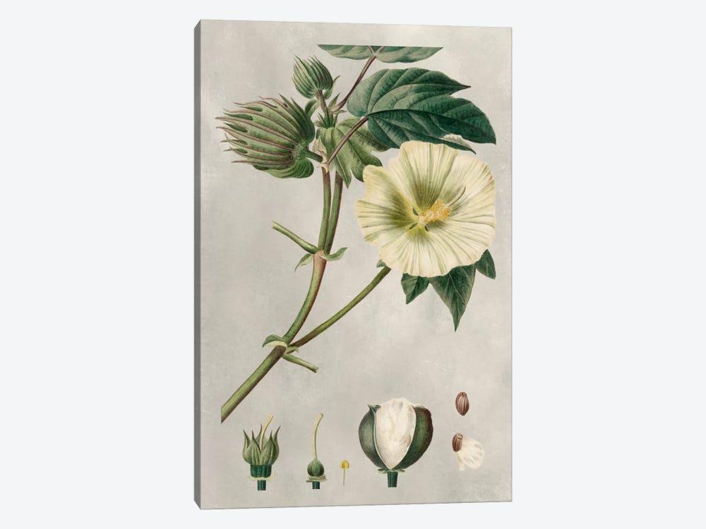 Tropical Varieties II by Pancrace Bessa 1-piece Canvas Wall Art