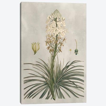 Tropical Varieties III Canvas Print #BES3} by Pancrace Bessa Canvas Print