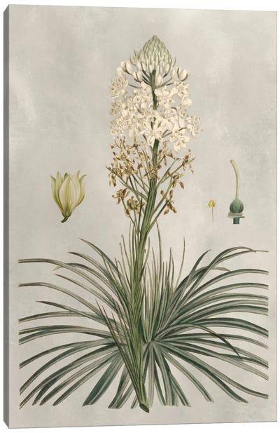 Tropical Varieties III Canvas Art Print