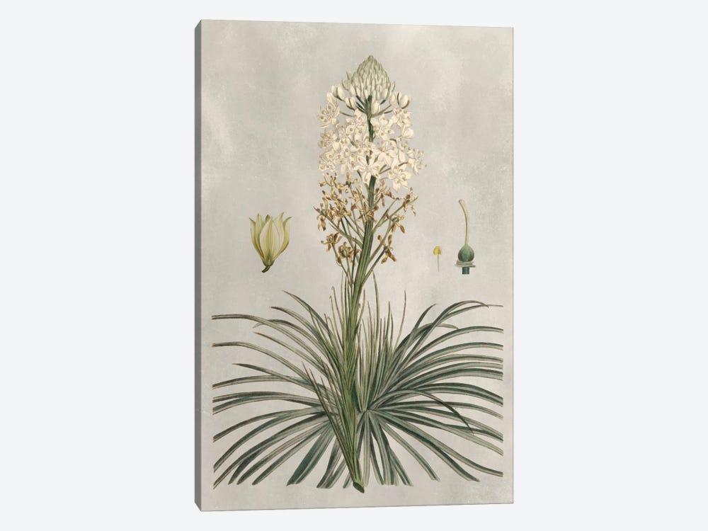 Tropical Varieties III by Pancrace Bessa 1-piece Canvas Art Print