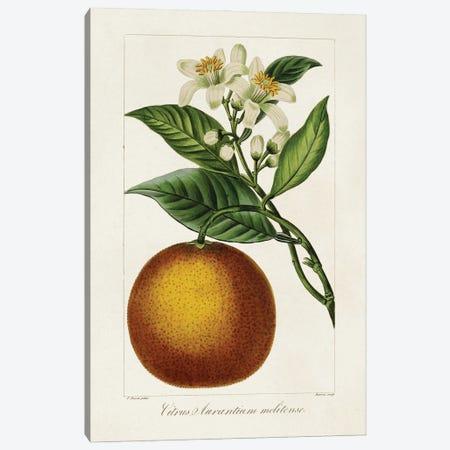 Antique Citrus Fruit I Canvas Print #BES4} by Pancrace Bessa Canvas Wall Art