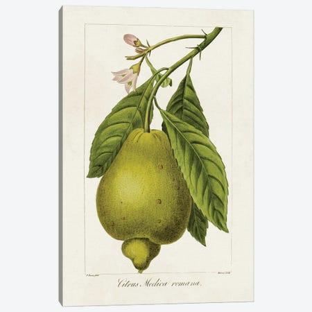 Antique Citrus Fruit III Canvas Print #BES5} by Pancrace Bessa Canvas Art