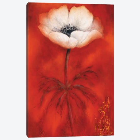 Anemone II Canvas Print #BET2} by Betty Jansma Canvas Wall Art