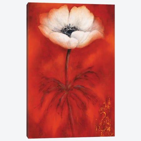 Anemone II Canvas Print #BET2} by Betty Jansma Canvas Wall Art