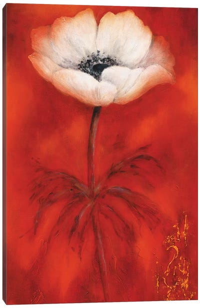 Anemone II Canvas Art Print