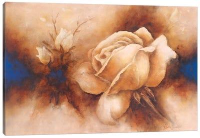 Rose II Canvas Art Print