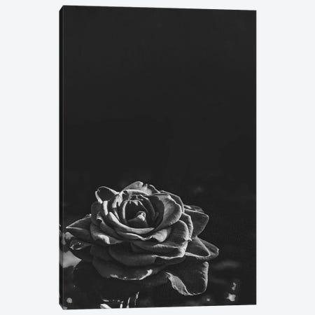 Dark Rose II Canvas Print #BFD54} by Bona Fidesa Canvas Art Print