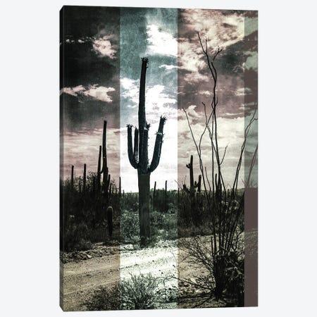 Desert Cactus Canvas Print #BFD83} by Bona Fidesa Canvas Art Print