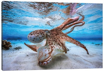 Dancing Octopus Canvas Art Print