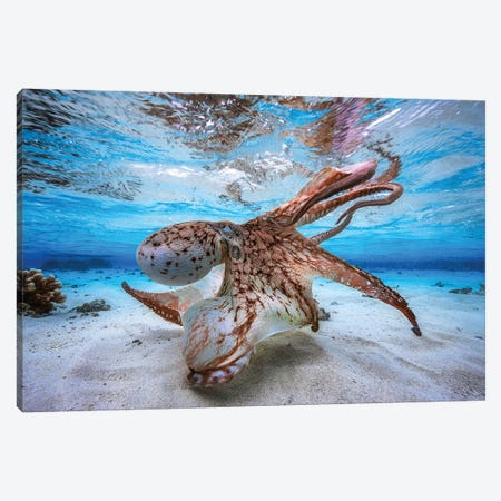 Dancing Octopus Canvas Print #BGA11} by Barathieu Gabriel Canvas Art