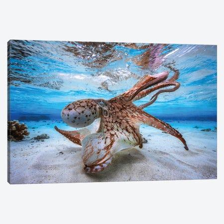 Dancing Octopus Canvas Print #BGA11} by Barathieu Gabriel Canvas Art