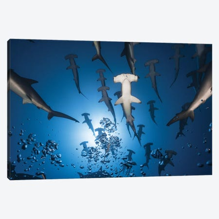 Hammerhead Shark Canvas Print #BGA12} by Barathieu Gabriel Canvas Artwork