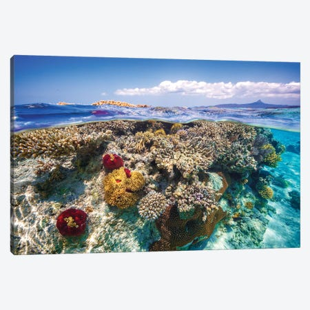 Mayotte : The Reef Canvas Print #BGA16} by Barathieu Gabriel Art Print