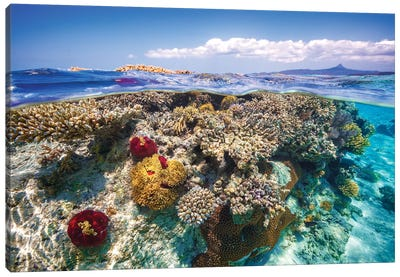 Mayotte : The Reef Canvas Art Print