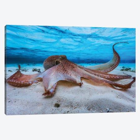 Octopus Canvas Print #BGA17} by Barathieu Gabriel Canvas Print