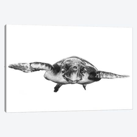 White And Turtle Canvas Print #BGA18} by Barathieu Gabriel Canvas Art