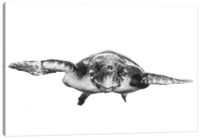 White And Turtle Canvas Art Print