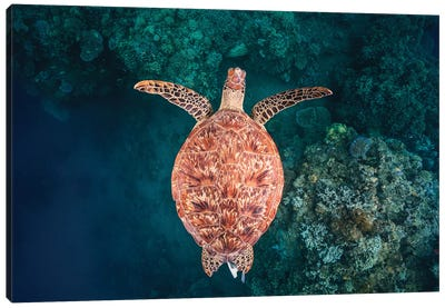 Flying Over The Reef Canvas Art Print