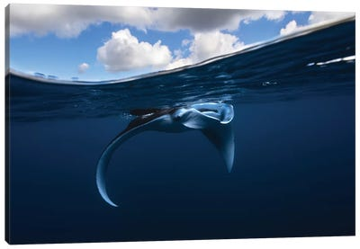 Little Manta Ray Canvas Art Print