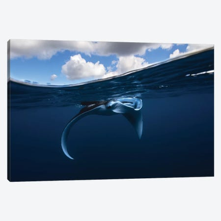 Little Manta Ray Canvas Print #BGA1} by Barathieu Gabriel Canvas Art