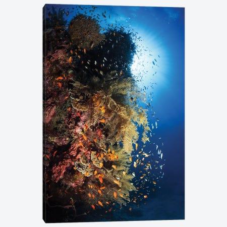 Life Explosion Canvas Print #BGA22} by Barathieu Gabriel Art Print