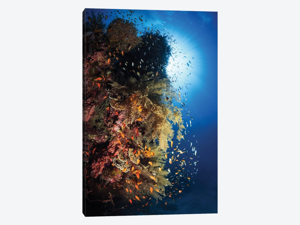 Life Explosion by Barathieu Gabriel 1-piece Art Print