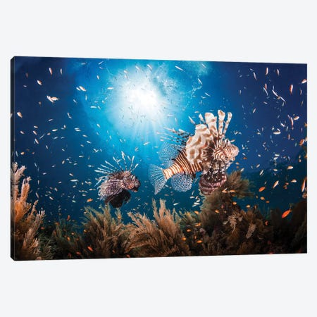 Lionfish Canvas Print #BGA23} by Barathieu Gabriel Canvas Print