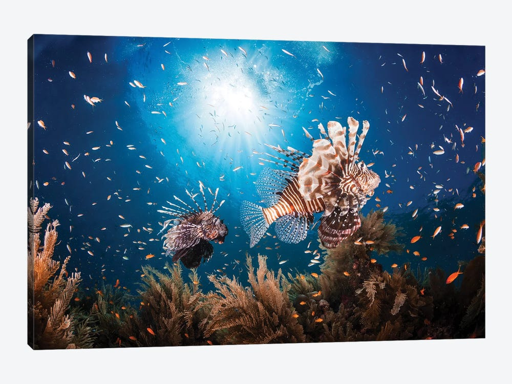 Lionfish by Barathieu Gabriel 1-piece Canvas Artwork