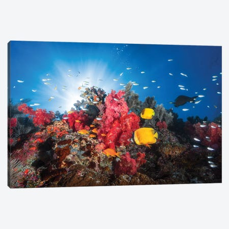 Reef Life Canvas Print #BGA24} by Barathieu Gabriel Canvas Artwork