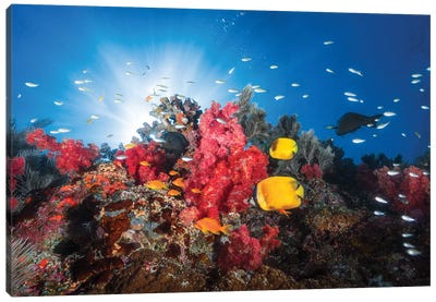 Reef Life Canvas Art Print